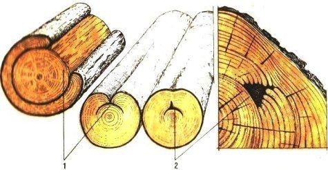 2p/astrong/p Так называется наружное одностороннее омертвление ствола. Лишенный коры углубленный участок вытянут по длине сортимента, по краям имеет наплывы (рис. 10). Этот порок встречается у всех пород; образуется он вследствие обдира, ушиба, ожога или перегрева коры растущего дерева. У хвойных пород сухобокость сопровождается повышенной смолистостью. В области сухобокости часто появляется заболонная грибная окраска; ядровые окраски и гнили в этом случае смещены в наружные зоны древесины. В круглых сортиментах порок измеряют по глубине, ширине и длине. Сухобокость изменяет правильную форму круглых сортиментов, вызывает завитки и нарушает целостность древесины у мест наплывов, снижает выход пиломатериалов и шпона.02