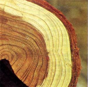 mehanicheskie-svojstva-drevesini